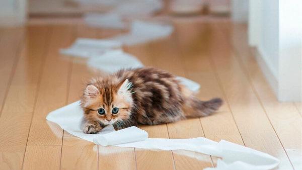 Кошачий в доме – не избежать казусов