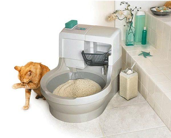 Кошкин туалет должен быть всегда чист – животное может игнорировать грязный лоток