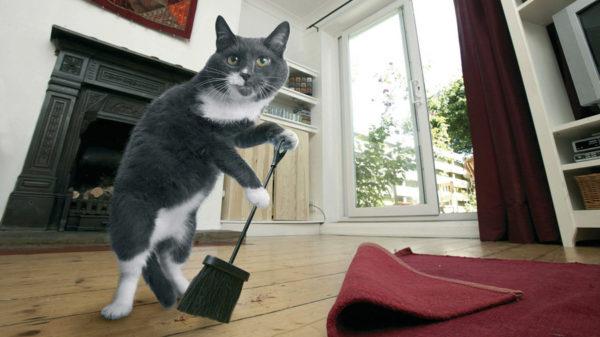 Увы, последствия своих «дел» котик сам убрать не сможет