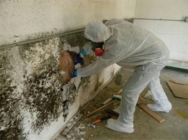 Большое дело – смыть грибок. Стены поражены до бетона, кирпича