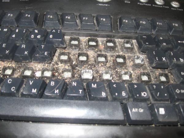 Вот почему нужно не забывать чистить клавиатуру