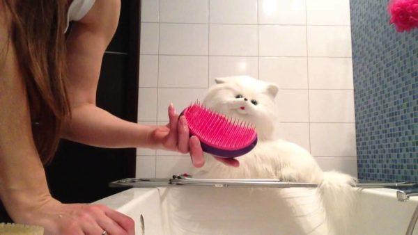 Какие-то игрушки нужно чистить только вручную