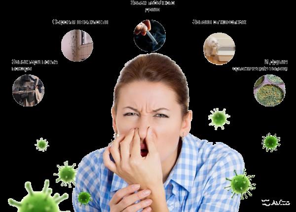 Поглотители запахов бытовые