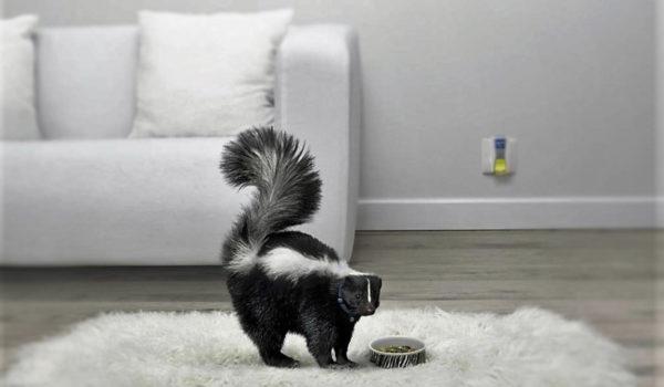 Удаление запахов из диванов