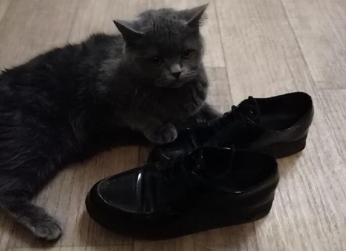 виноватый взгляд кот, нагадившего в туфли